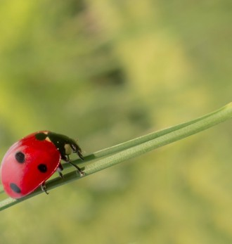 Life of a Lady Bug