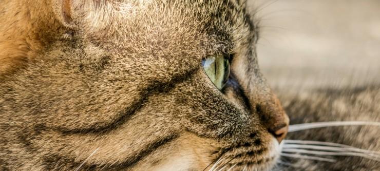 Where cats wander