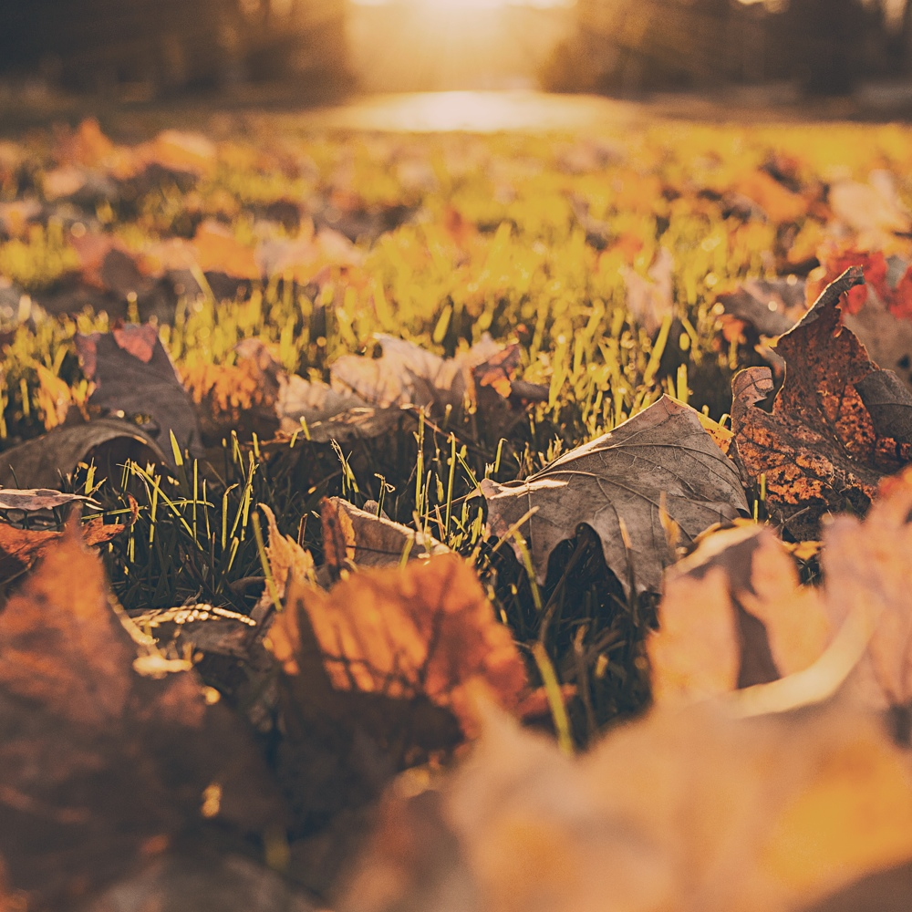 Signs of Autumns arrival
